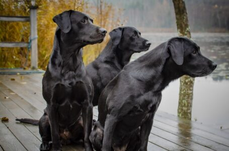 Científicos determinan que un año humano no equivale a siete años de perro
