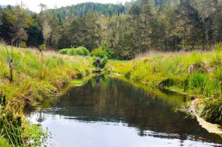Medio Ambiente emite resolución que prohíbe de forma permanente las actividades agrícolas y ganaderas en el Parque Nacional Valle Nuevo