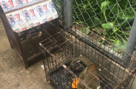 Arrestan a dos personas por explotación de animales exóticos en Punta Cana